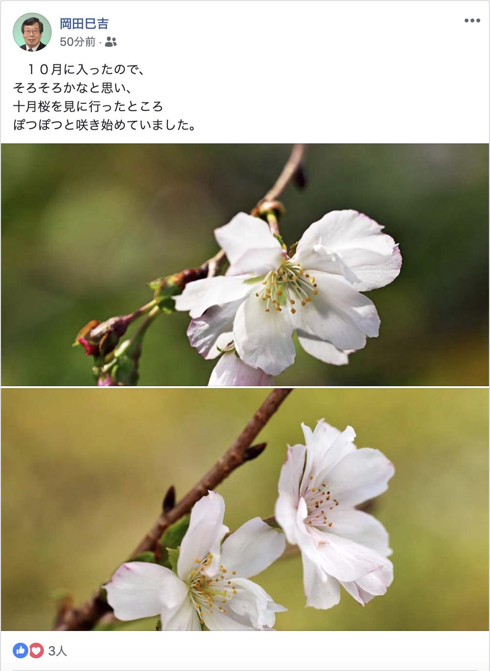 Hirosaki hanaikada 201801